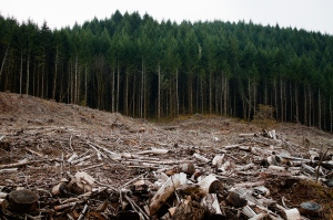 Blog - Clearcutting-Oregon