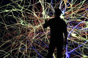 Blog - Human Brain